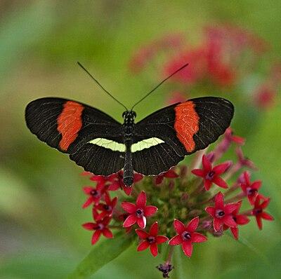 Botanischer Garten - München Tropischer Schmetterling.jpg