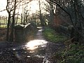 Bridge over Disused Railway in Bushcliff Wood. - geograph.org.uk - 292441.jpg