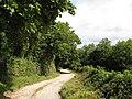Bridlepath, Coed Gopa - geograph.org.uk - 936844.jpg
