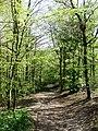 Bridleway, Friston Hill - geograph.org.uk - 1272337.jpg