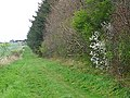Bridleway to Gallows Hill - geograph.org.uk - 1263934.jpg