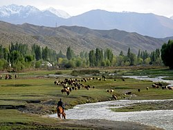 Bringing the sheep home, on the southern shore of Issyk-Kul (3968109583).jpg