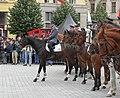 Brno, náměstí Svobody - mezinárodní policejní mistrovství ČR v jízdě na koni - příjezd a defilé soutěžních ekvip obr16.jpg