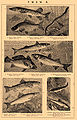 Brockhaus and Efron Encyclopedic Dictionary b53 432-4.jpg