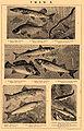 Brockhaus and Efron Encyclopedic Dictionary b53 432-4.jpg