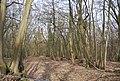 Brown's Wood - geograph.org.uk - 1759230.jpg