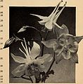Bulbs and seeds for fall 1938 (1938) (20411482862).jpg