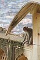 Bundi Palace monkey (8043093997).jpg