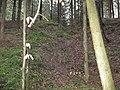 Burgstall Holenstein, einseitige Scharte in der Mitte des Turmhügels, Blick nach E vom Seitentälchen zum Reutebachtal.jpg