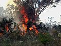 Bush ablaze - Flickr - Highway Patrol Images.jpg