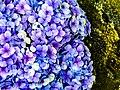 Bush with full of flowers.jpg