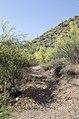 Butcher Jones Trail, Burro Cove and Beyond, Tonto National Park, Arizona - panoramio (23).jpg