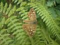 Butterfly085.jpg