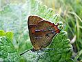 Butterfly (8368857356).jpg