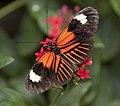 Butterfly 16 (4867266344).jpg