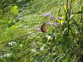 Butterfly 2 at St Marks NWR.JPG