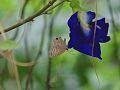Butterfly In a flower.jpg