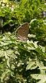Butterfly on green.jpg
