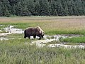 By ovedc - Lake Clark National Park - 08.jpg