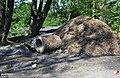 Bytom, Dzikie składowisko odpadów - fotopolska.eu (319567).jpg