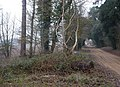Byway through trees near Vale Farm - geograph.org.uk - 1622111.jpg