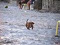 Cachorro - panoramio (1).jpg