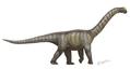Camarasaurus supremus.png