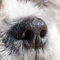 Canine Nose Macro Photo.png