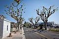 Cannes (5647556248).jpg