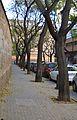 Carrer d'Hug de Montcada, arbres.JPG