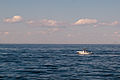Casco bay whale watching 08.07.2012 15-54-55.jpg