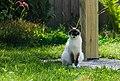 Cat - Schelkun, Sysert District, Russia-1.jpg