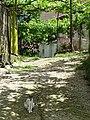 Cat in Driveway - Delvina - Albania (42297924622).jpg
