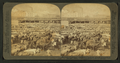 Cattle in the Great Union Stock Yards, the greatest of the live stock markets, Chicago, Ill, from Robert N. Dennis collection of stereoscopic views 2.png