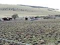 Cattle picnic area on Varncombe Hill - geograph.org.uk - 1749217.jpg