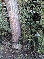 Celis tree.jpg