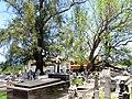 Cementerio Viejo de Camuy, Puerto Rico - panoramio (6).jpg