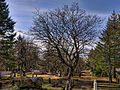 Cemetery (4543843090).jpg