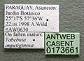 Cephalotes angustus casent0173661 label 1.jpg