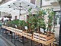 Chênes truffiers - plants.jpg