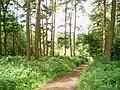 Chaddesley Wood - geograph.org.uk - 472031.jpg