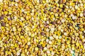 Chana-Chick pea-Cicer arietinum-September 27, 2016-IMG 8013-2.jpg