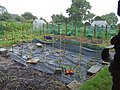 Chesworth Allotments - geograph.org.uk - 795678.jpg