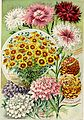Childs' rare flowers, vegetables, and fruits (1908) (20419205940).jpg