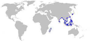 Whitespotted bamboo shark - Image: Chiloscyllium plagiosum distmap