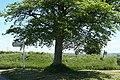 Chittlehampton, Lerwell Beech Tree Cross - geograph.org.uk - 441523.jpg