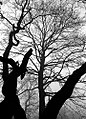 "Cincinnati - Spring Grove Cemetery & Arboretum ""Branches - Thick, Thin, Near & Far"" (5381687930).jpg"
