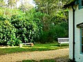 Clouds Hill garden, Dorset - geograph.org.uk - 587817.jpg
