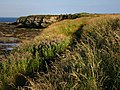 Coast path, south of Seahouses - geograph.org.uk - 924888.jpg