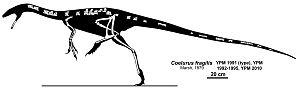 Coelurus - Skeletal restoration showing known remains